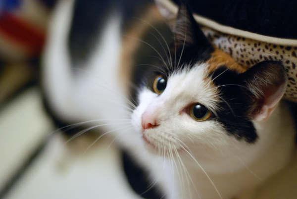 kittycat3