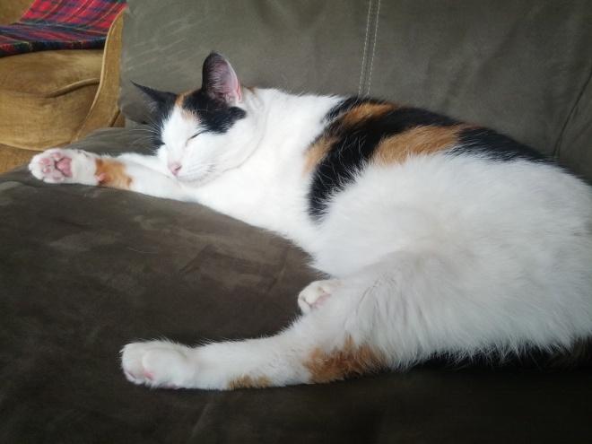 Kitten snoozes?