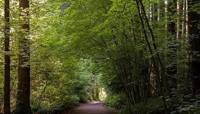 Path(1)_rdax_400x229